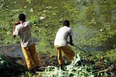 Ichamati-River-Pabna-Bangladesh-Cleaning-on-December-2013-36