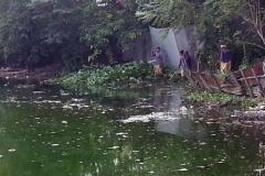 Ichamati-River-Pabna-Bangladesh-Cleaning-on-October-2013-17