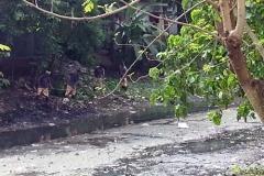 Ichamati-River-Pabna-Bangladesh-Cleaning-on-October-2013-27
