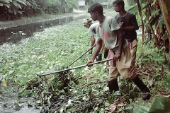 Ichamati-River-Pabna-Bangladesh-Cleaning-on-September-2019-12
