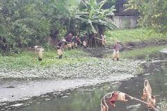Ichamati-River-Pabna-Bangladesh-Cleaning-on-September-2019-30