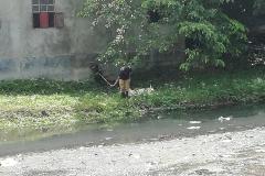 Ichamati-River-Pabna-Bangladesh-Cleaning-on-September-2019-34