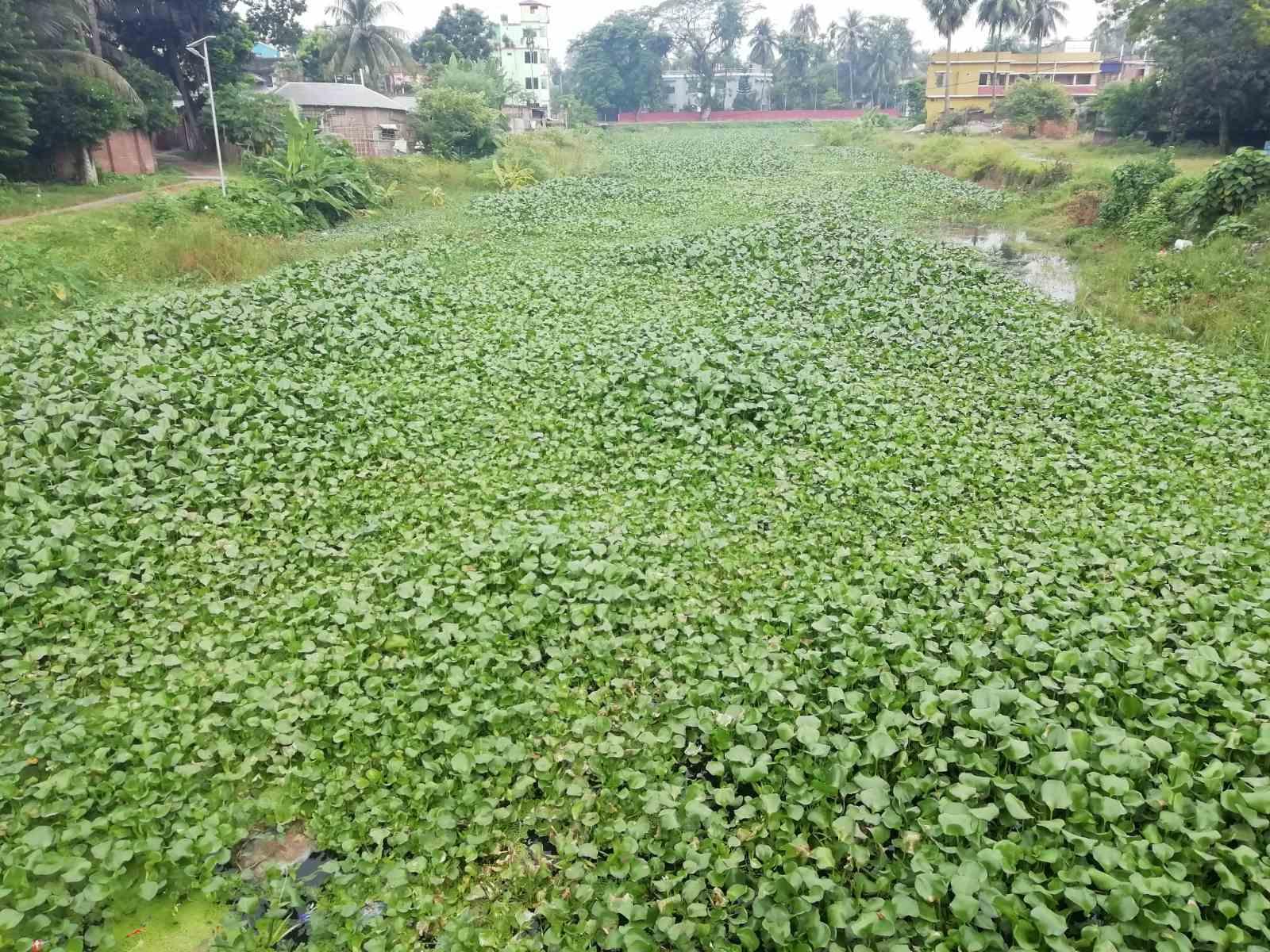 Ichamati-River-Pabna-Bangladesh-on-August-2021-4.jpg