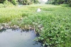 Ichamati-River-Pabna-Bangladesh-on-August-2021-14