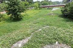 Ichamati-River-Pabna-Bangladesh-on-August-2021-15
