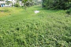Ichamati-River-Pabna-Bangladesh-on-August-2021-20