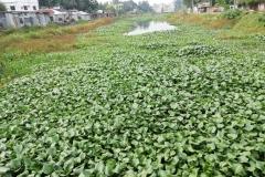 Ichamati-River-Pabna-Bangladesh-on-August-2021-21