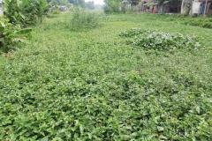 Ichamati-River-Pabna-Bangladesh-on-August-2021-25