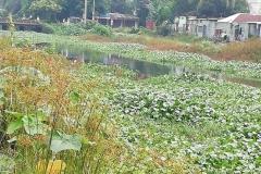Ichamati-River-Pabna-Bangladesh-on-August-2021-26