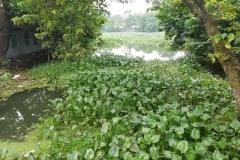 Ichamati-River-Pabna-Bangladesh-on-August-2021-27