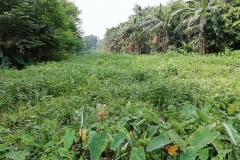 Ichamati-River-Pabna-Bangladesh-on-August-2021-28