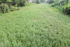 Ichamati-River-Pabna-Bangladesh-on-August-2021-29