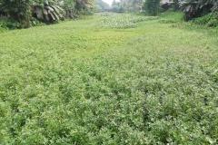 Ichamati-River-Pabna-Bangladesh-on-August-2021-30