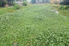 Ichamati-River-Pabna-Bangladesh-on-August-2021-4