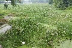 Ichamati-River-Pabna-Bangladesh-on-August-2021-6