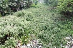 Ichamati-River-Pabna-Bangladesh-on-August-2021-8