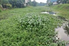 Ichamati-River-Pabna-Bangladesh-on-August-2021-9