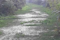 Ichamati-River-Pabna-Bangladeh-as-of-February-2021-19