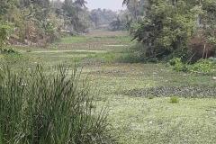 Ichamati-River-Pabna-Bangladeh-as-of-February-2021-3