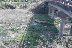 Ichamati-River-Pabna-Bangladeh-as-of-February-2021-4
