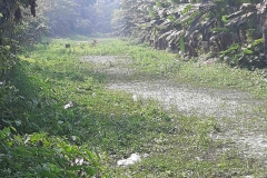 Ichamati-River-Pabna-Bangladeh-as-of-February-2021-5