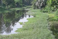 Ichamati-River-Pabna-Bangladesh-as-of-July-2020-17