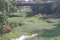 Ichamati-River-Pabna-Bangladesh-as-of-July-2020-18