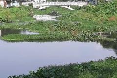 Ichamati-River-Pabna-Bangladesh-as-of-July-2020-27