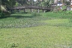 Ichamati-River-Pabna-Bangladesh-as-of-July-2020-32