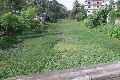 Ichamati-River-Pabna-Bangladesh-as-of-July-2020-35