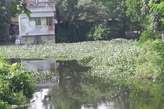 Ichamati-River-Pabna-Bangladesh-as-of-July-2020-38