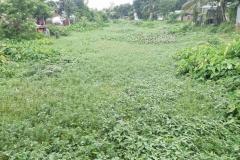 Ichamati-River-Pabna-Bangladesh-July-2021-14