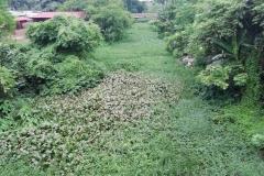Ichamati-River-Pabna-Bangladesh-July-2021-16