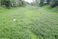 Ichamati-River-Pabna-Bangladesh-July-2021-2