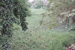 Ichamati-River-Pabna-Bangladesh-July-2021-21