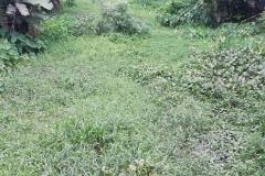 Ichamati-River-Pabna-Bangladesh-July-2021-22