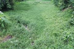 Ichamati-River-Pabna-Bangladesh-July-2021-3