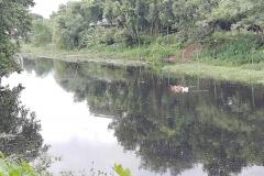 Ichamati-River-Pabna-Bangladesh-July-2021-33