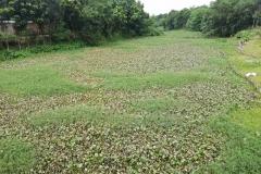 Ichamati-River-Pabna-Bangladesh-July-2021-37