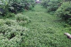 Ichamati-River-Pabna-Bangladesh-July-2021-38