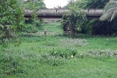 Ichamati-River-Pabna-Bangladesh-July-2021-4