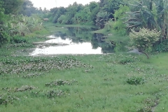Ichamati-River-Pabna-Bangladesh-July-2021-5