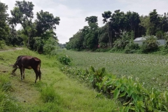 Ichamati-River-Pabna-Bangladesh-July-2021-9