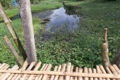 Ichamati-River-Pabna-Bangladesh-as-of-November-2020-26