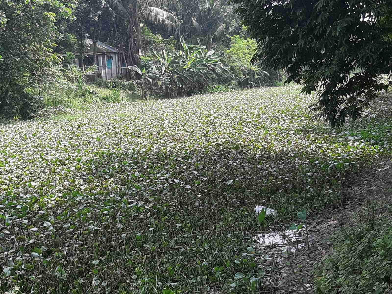 Ichamati-River-Cleaning-Pabna-Bangladesh-October-2020-1.jpg