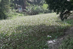 Ichamati-River-Cleaning-Pabna-Bangladesh-October-2020-1