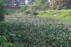 Ichamati-River-Cleaning-Pabna-Bangladesh-October-2020-10