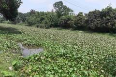 Ichamati-River-Cleaning-Pabna-Bangladesh-October-2020-12