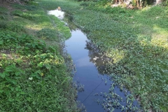 Ichamati-River-Cleaning-Pabna-Bangladesh-October-2020-13