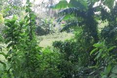 Ichamati-River-Cleaning-Pabna-Bangladesh-October-2020-15